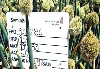 monsanto seeds