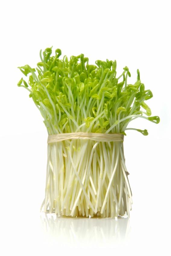 GMO Alfalfa