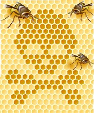 [Image: honeybee.jpg]