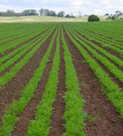 Organic farming battles climate change