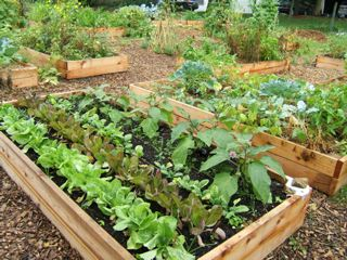 The Government Controls Your Garden
