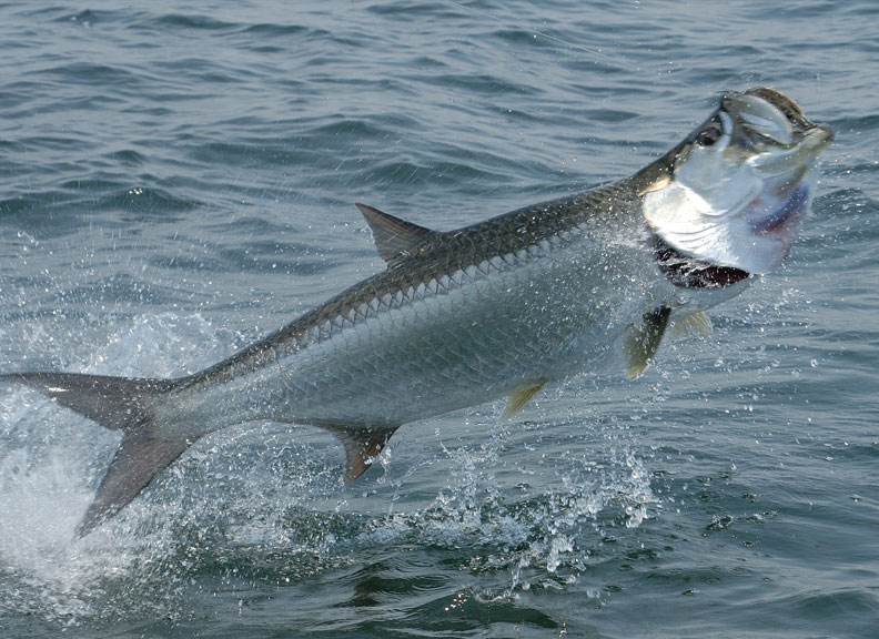 Do you have an energy royalty trust for Tarpon fishing florida