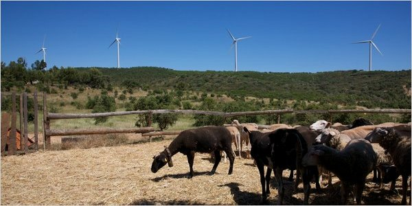 Portugal Renewable Energy Investing