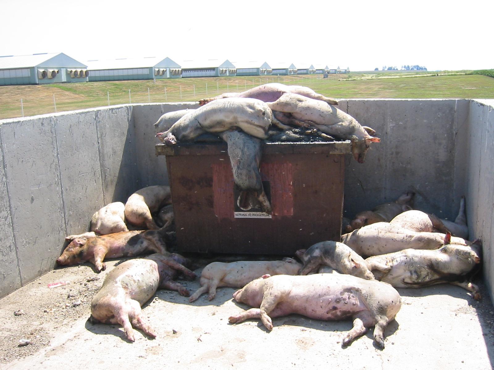 hogss