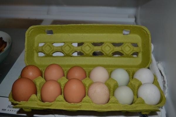 pasturized eggs