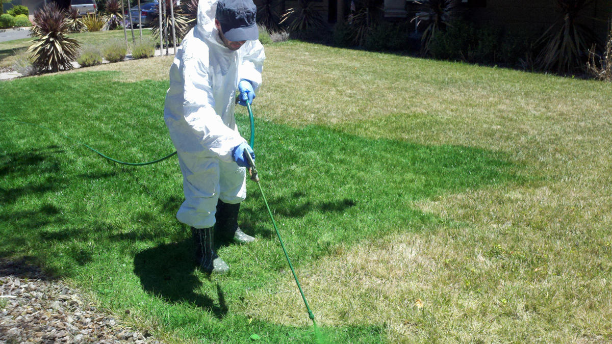 californians paint their lawns green to hide results of drought. Black Bedroom Furniture Sets. Home Design Ideas