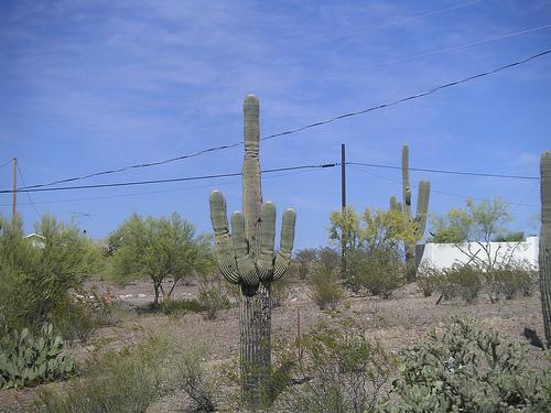 cactusmiddle