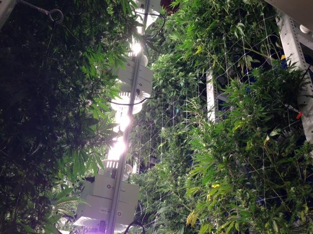 vertical grow op 0116
