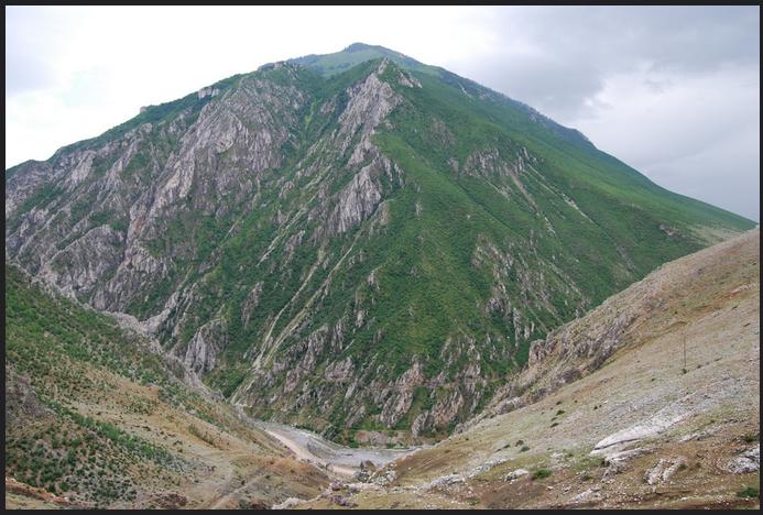 albania dog 4