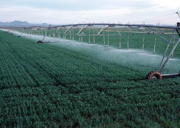 irrigation fields 1