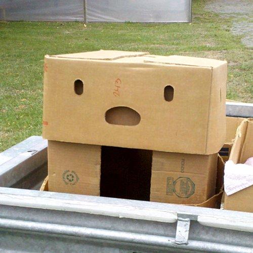 Pareidolia Box