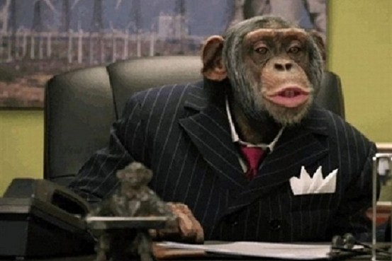 Monkey Stock Market